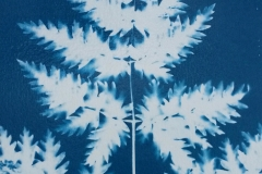 LucySmith_cyanotype1