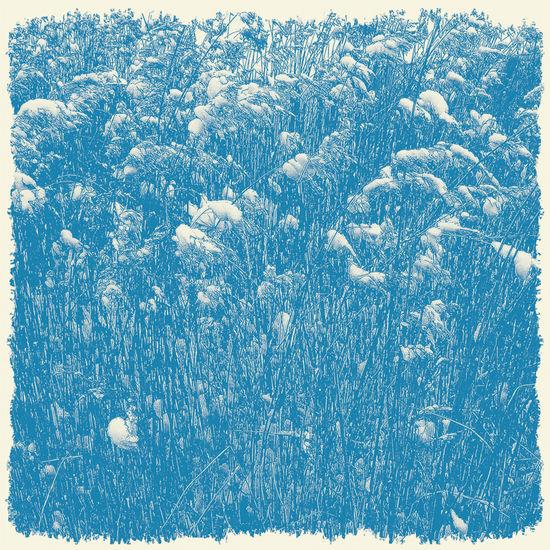 grasses-in-snow-london