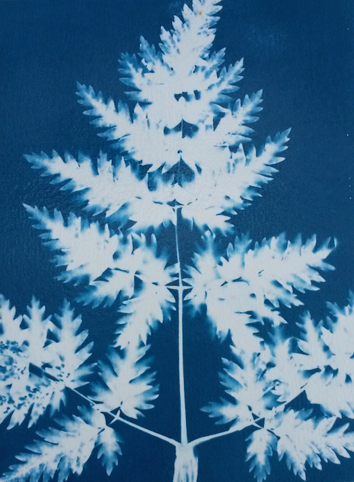 LucySmith_cyanotype1-2
